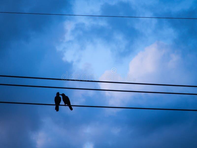 Cuervos ayudados a atusarse encaramado en alto voltaje fotos de archivo