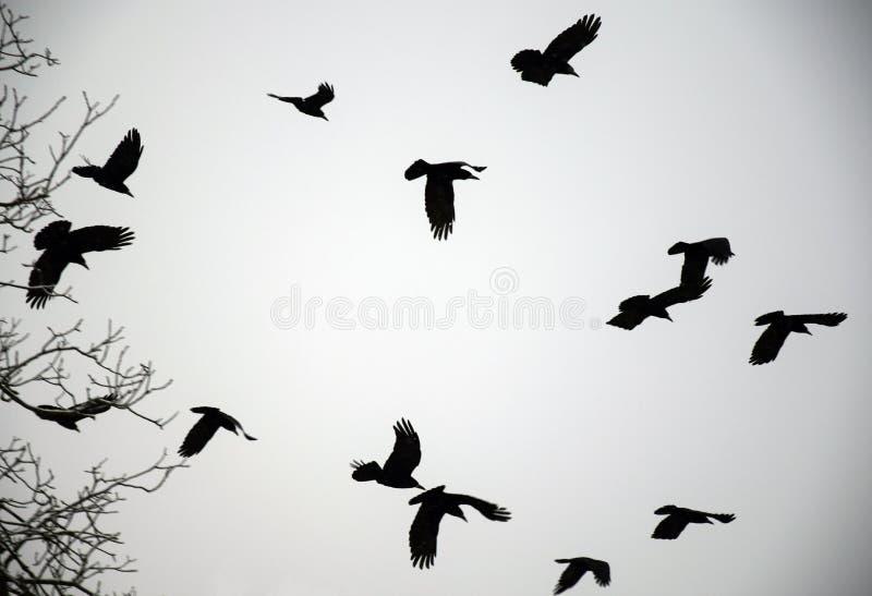 Cuervos del invierno imagenes de archivo