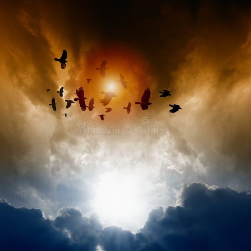 Cuervos en cielo oscuro fotografía de archivo libre de regalías