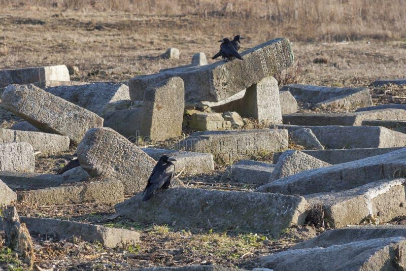 Cuervos en las lápidas mortuarias caidas del cementerio judío antiguo imágenes de archivo libres de regalías