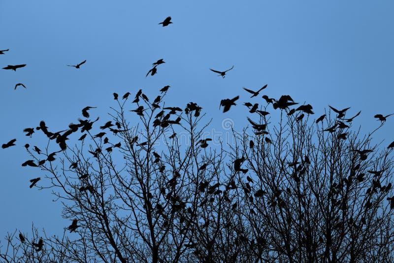 Cuervos en los árboles imagen de archivo