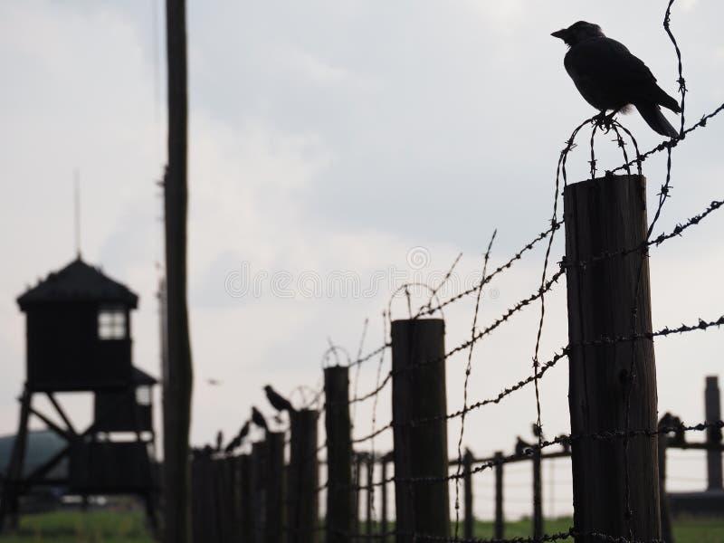 Cuervos en Majdanek fotografía de archivo libre de regalías