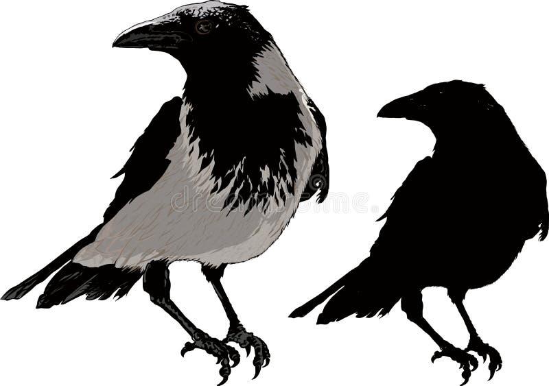 Cuervos negros ilustración del vector