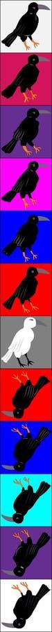 Cuervos y cuervos, ordenanza organizada en cuadrados coloreados columna fotos de archivo