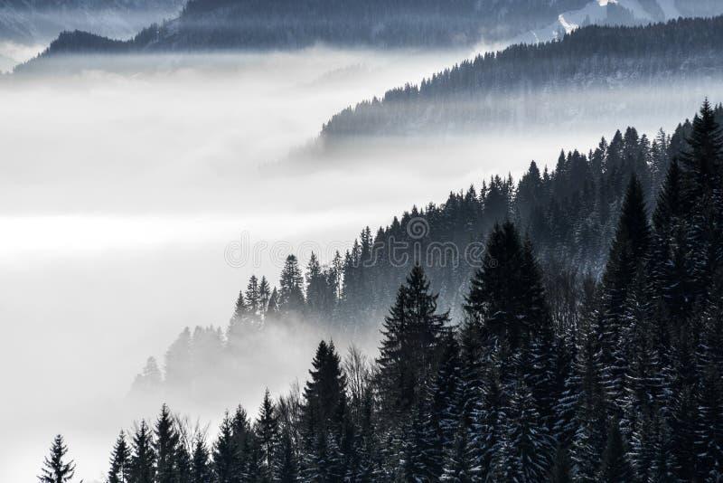 Cuesta de montaña boscosa en niebla de mentira baja del valle con las siluetas de las coníferas imperecederas cubiertas en nevoso foto de archivo libre de regalías