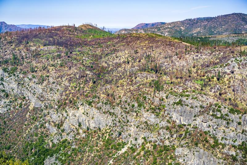 Cuesta de montaña dañada incendio fuera de control que muestra las muestras de la recuperación en el parque nacional de Yosemite, fotos de archivo libres de regalías
