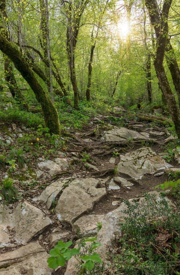 Cuesta de monta?a rocosa de la piedra caliza Puesta del sol en el bosque fotos de archivo