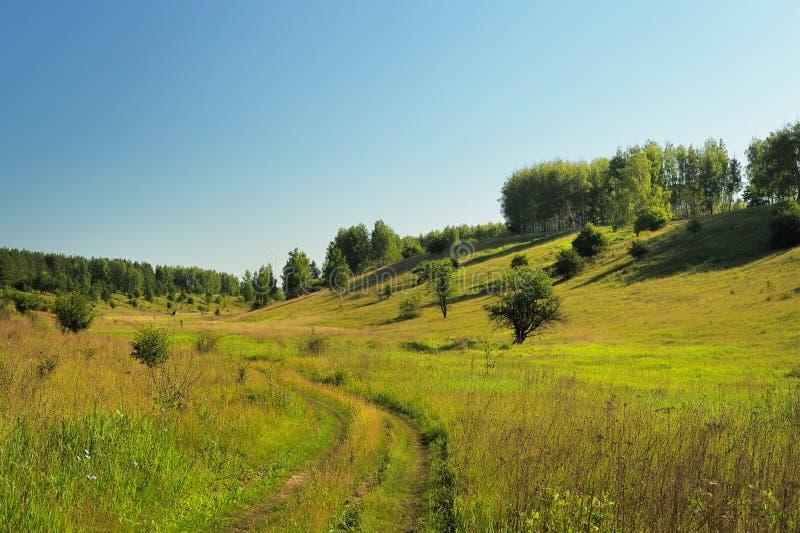 Cuesta verde reservada de la colina del verano con los árboles, el camino y el cielo azul fotografía de archivo libre de regalías