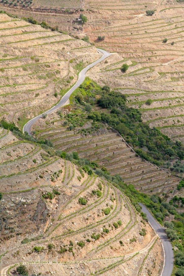 Cuestas de los viñedos del vino de Oporto imagenes de archivo