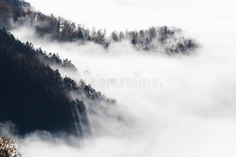 Cuestas del bosque de la picea que emergen de la niebla de la mañana imagen de archivo libre de regalías