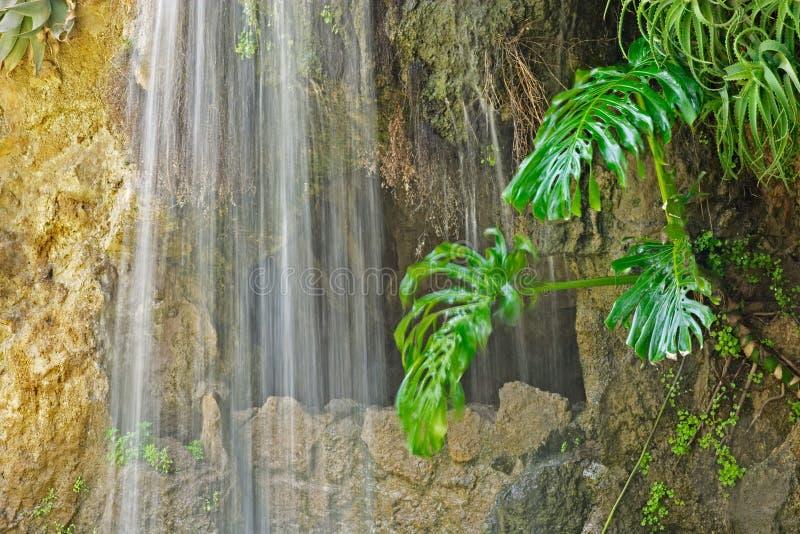 Cueva, cascada y planta acuática en Parque Genoves, Cádiz fotografía de archivo