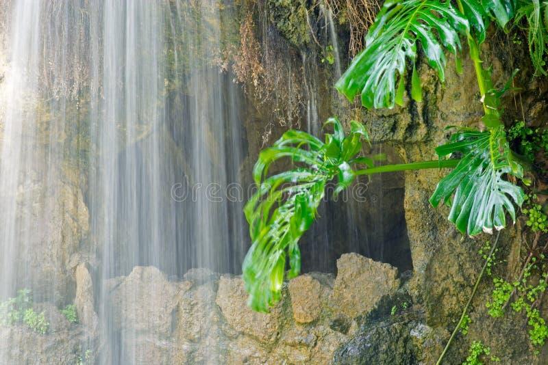 Cueva, cascada y planta acuática en Parque Genoves, Cádiz fotos de archivo