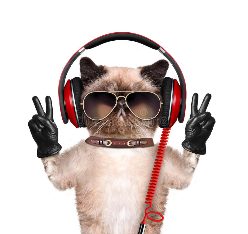 Cuffie del gatto immagini stock libere da diritti