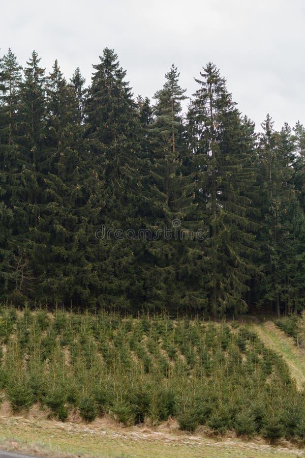 Cuidado com selva - monocultura da floresta fotografia de stock