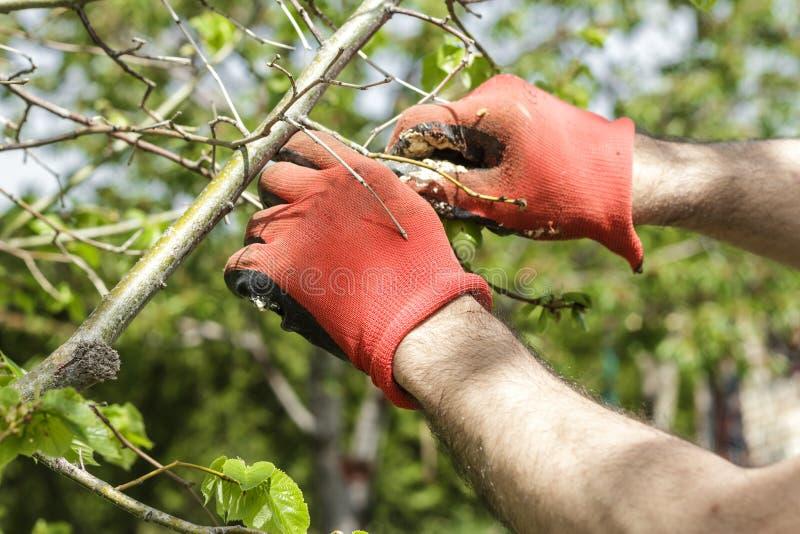 Cuidado da árvore imagens de stock