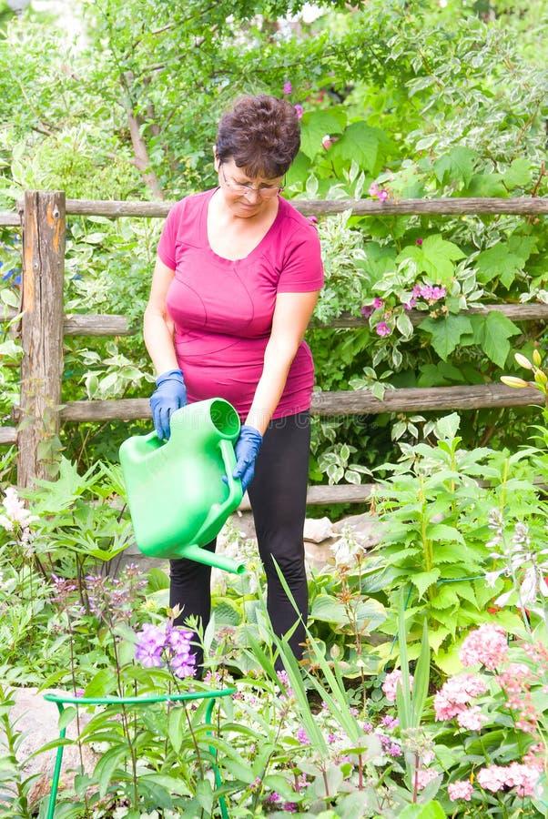 Cuidado de tomada fêmea idoso das plantas no jardim do verão, flores molhando com uma lata molhando foto de stock