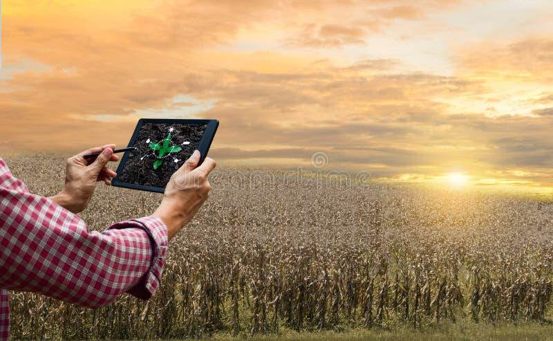 Cuidado del árbol futuro de la tecnología de la tableta del control del granjero y sequía del plantación de árboles global imagen de archivo libre de regalías