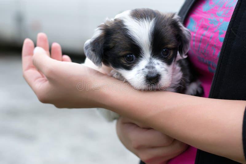Cuidado do cachorrinho fotografia de stock royalty free
