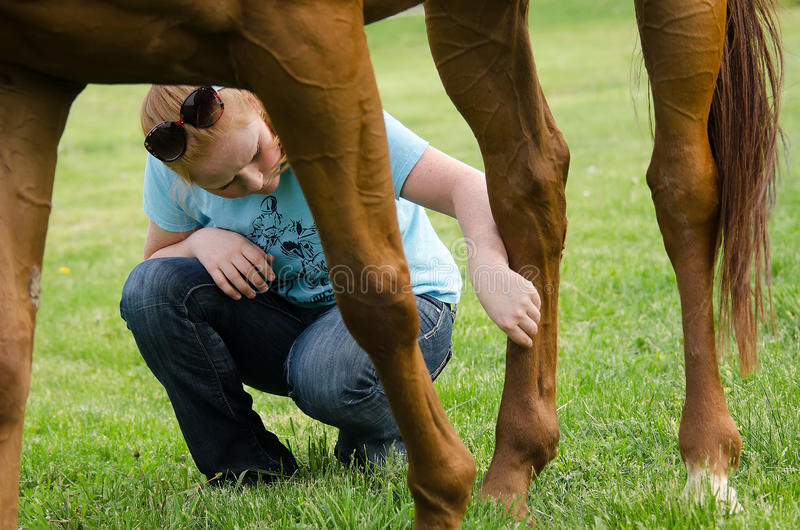 Cuidado do cavalo foto de stock royalty free