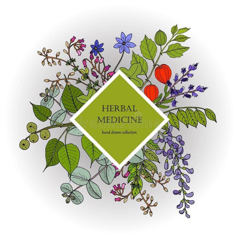 Cuidado natural de la salud, colecci?n del vintage de las hierbas medicinales exhaustas de la mano libre illustration