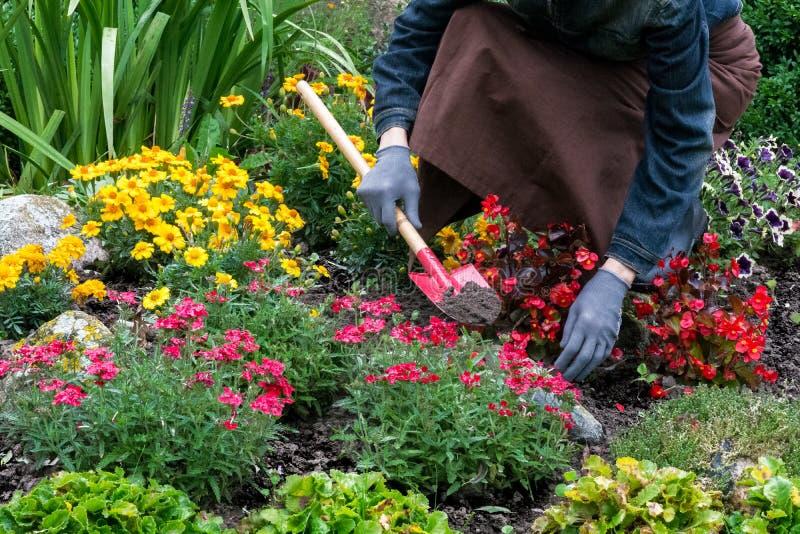 Cuidados da mulher sobre flores no jardim fotografia de stock