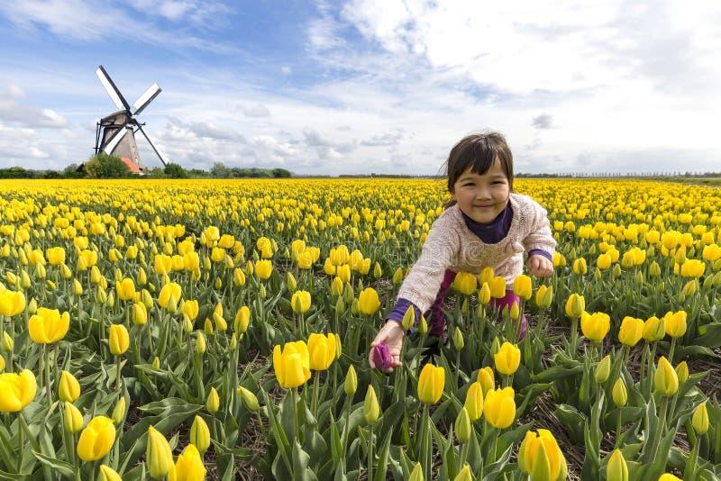 Cuidar el tulipán rojo solo entre los otros imagen de archivo libre de regalías