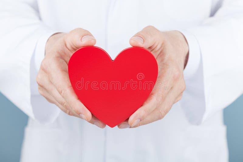 Cuide al cardiólogo que lleva a cabo un corazón en sus manos Cardiología y concepto de la enfermedad cardíaca imagen de archivo