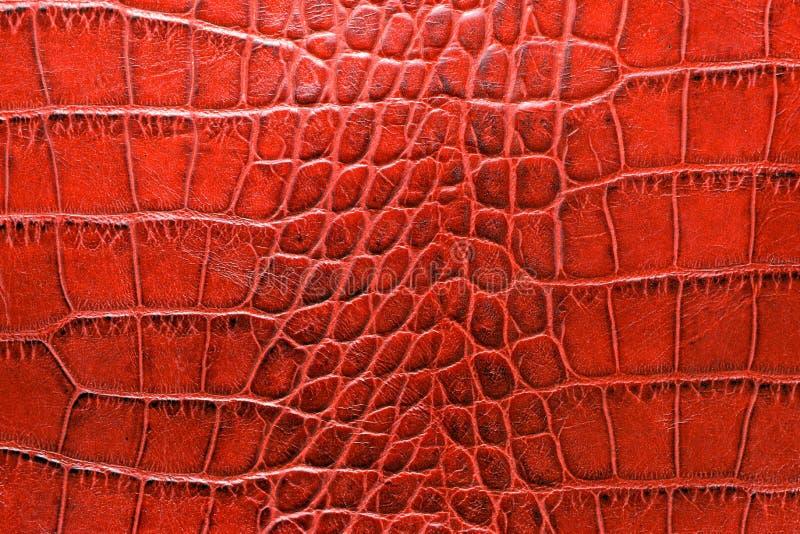 Cuir âgé d'alligator dans la fin de ton de couleur rouge  photos stock