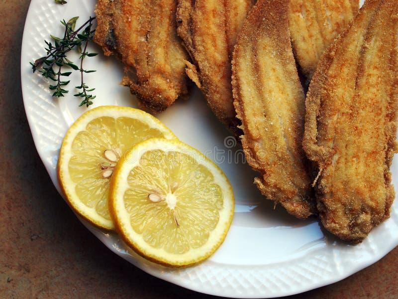 Cuisine vénitienne - semelle frite photo libre de droits