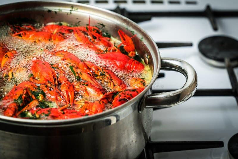 Cuisinier d'écrevisses dans l'eau avec des épices et des herbes photos libres de droits