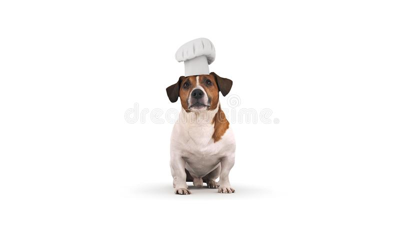 Cuisinier de chef de chien rendu 3d photographie stock libre de droits
