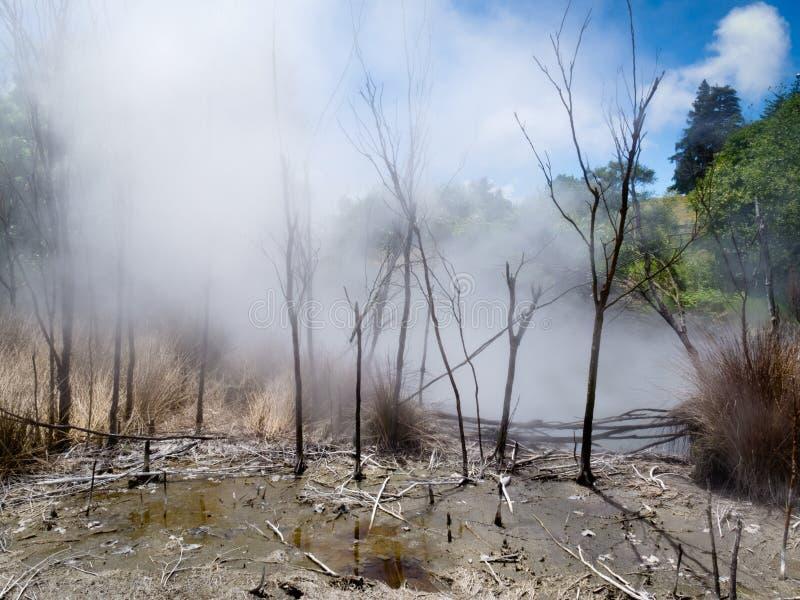 Cuisson à la vapeur de la source thermale volcanique dans Rotorua, N la Zélande image libre de droits