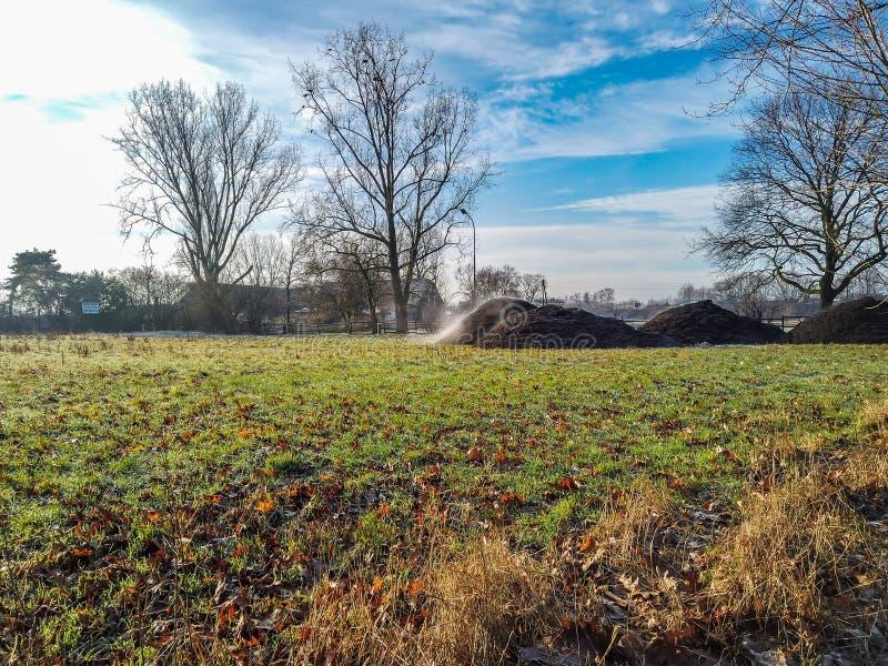 Cuisson à la vapeur de la pile de l'engrais sur le champ de ferme pendant l'hiver photos stock