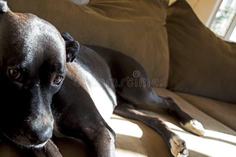 Cukierki Adoptujący pies zdjęcie royalty free