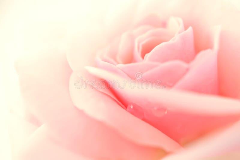 Cukierki menchii róża w miękkim kolorze i plama projektujemy zdjęcie stock