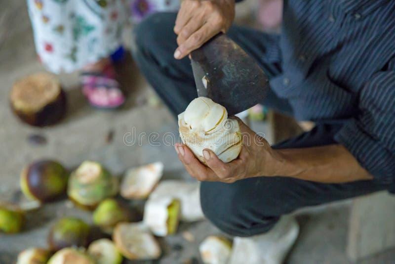 Cukrowa palma jest owoc Tajlandia zdjęcie royalty free