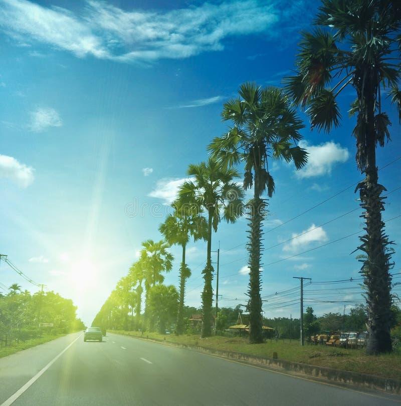 Cukrowa palma na drodze zdjęcie royalty free