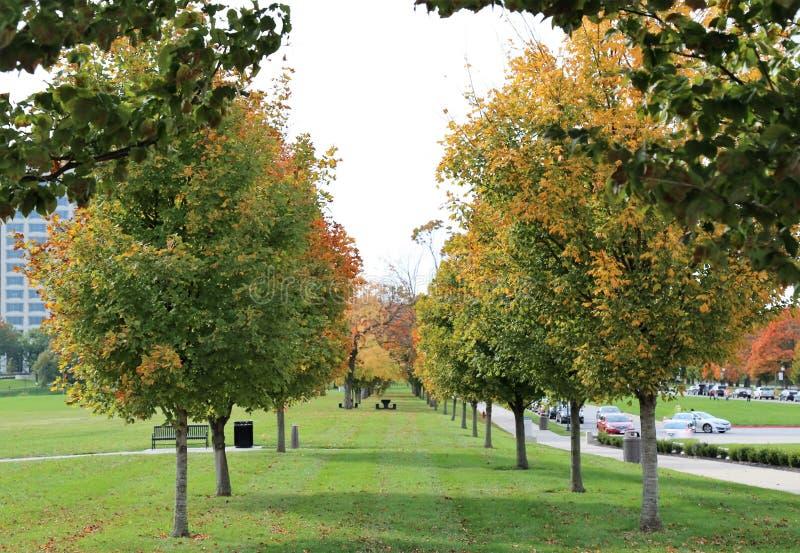 Cukrowi klonowi drzewa obrazy royalty free