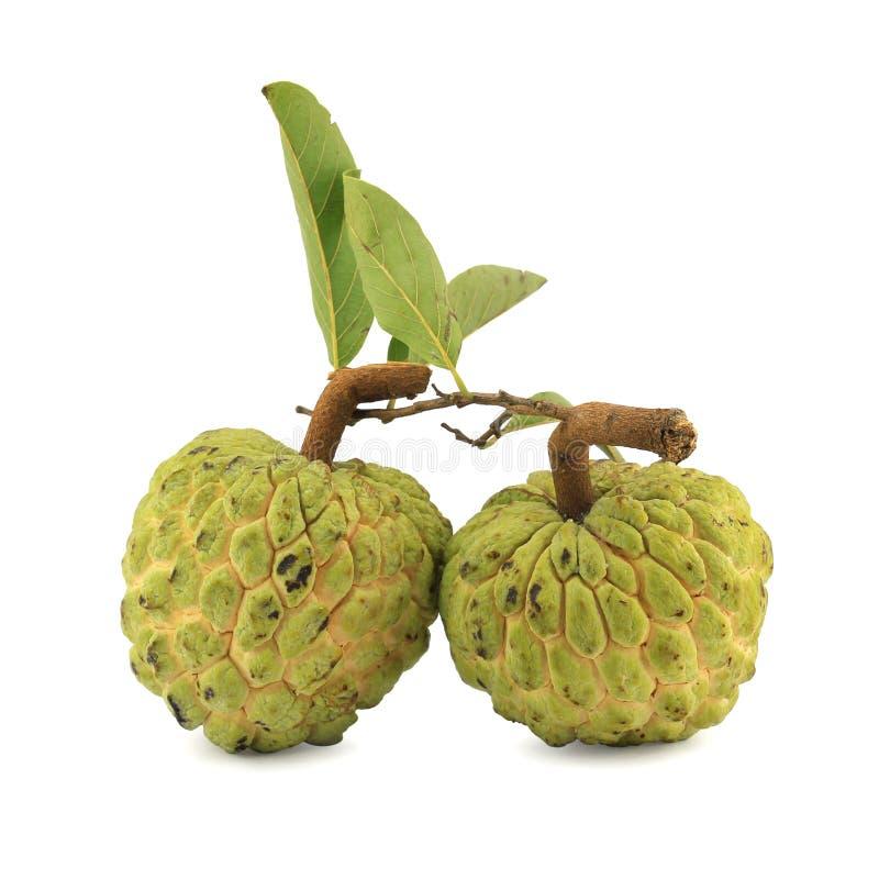 Cukrowy jabłko [Annona squamosa] zdjęcia stock