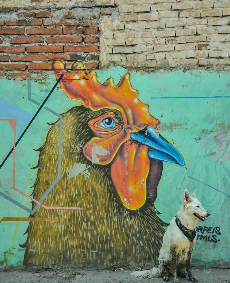 07/07/2018, Culiacan, Sinaloa, Meksyk: Pies z bandany siedzi przed kogutem obraz royalty free