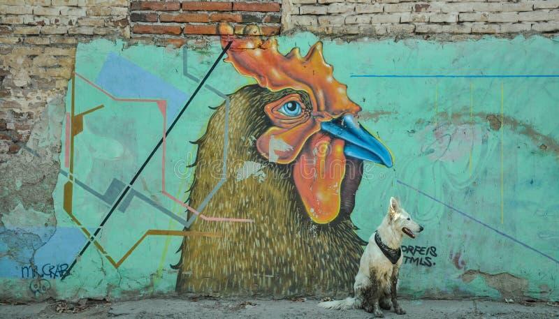 07/07/2018, Culiacan, Sinaloa, Messico: Un cane con bandana si siede davanti ad un gallo fotografie stock