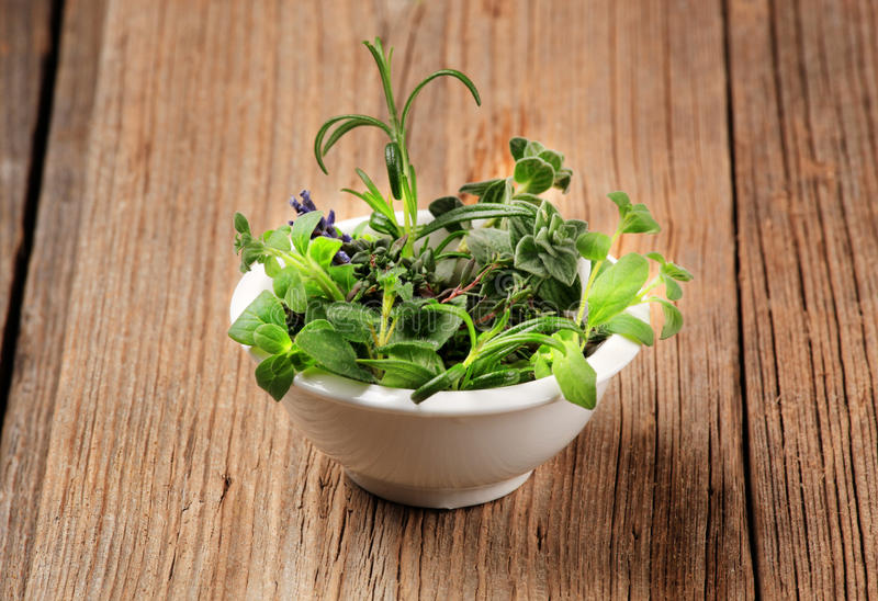 Download Culinary herbs stock photo. Image of sprig, culinary - 24075466