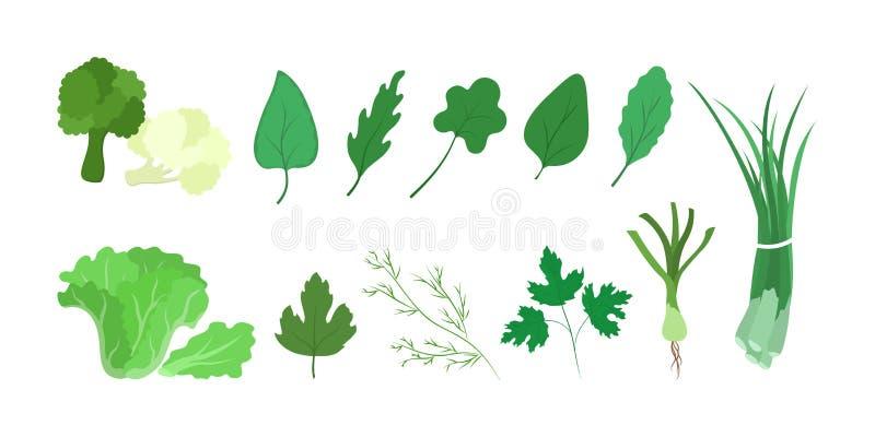 Culinary herbs set. Green parsley branch, fresh ingredient stock illustration