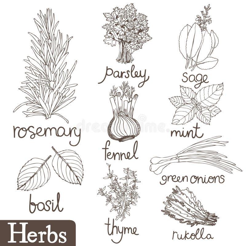 Culinary herbs set vector illustration