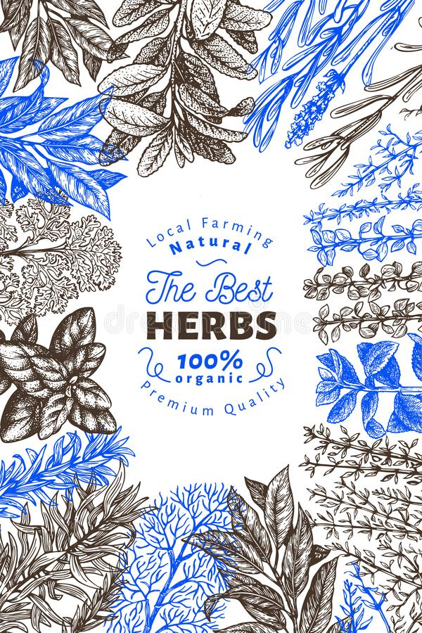 Culinary herbs and spices banner template. Vector background for design menu, packaging, recipes, label, farm market. Products. Hand drawn retro botanical royalty free illustration