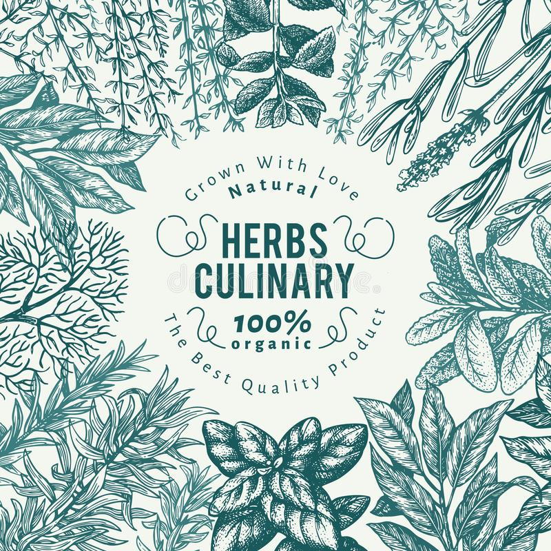 Culinary herbs and spices banner template. Vector background for design menu, packaging, recipes, label, farm market. Products. Hand drawn retro botanical stock illustration