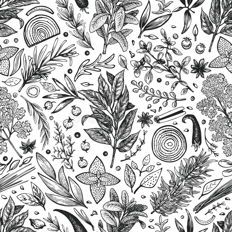 Culinary herbs and spices seamless pattern. Vector background for design menu, packaging, recipes, label, farm market products. stock illustration