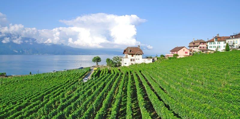 cully Geneva jezioro Switzerland obrazy stock