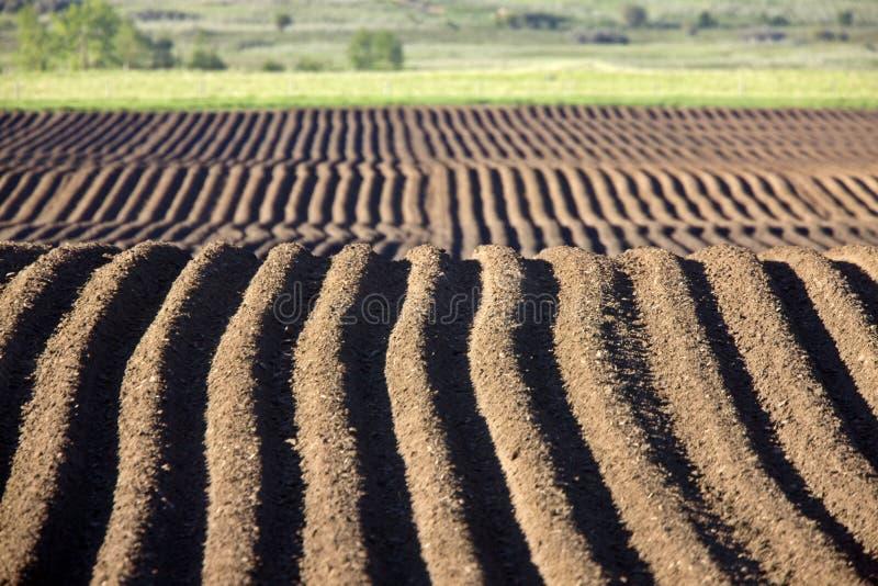 Cultivando as sementes das fileiras plalnted imagem de stock