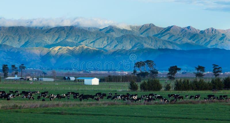 Cultivando Nova Zelândia imagens de stock